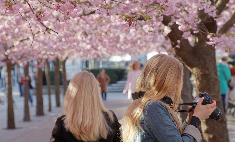 парк Kungsträdgården